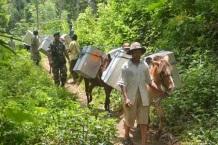 Sejumlah petugas bersiap mengirim logistik Pemilu menggunakan kuda di Desa Brambang Darussalam, Tlogosari, Bondowoso, Jawa Timur, Minggu (6/4).