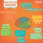 Vedantu-know-how-your-brain-works