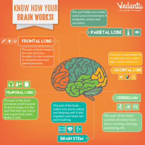 Vedantu-know-how-your-brain-works