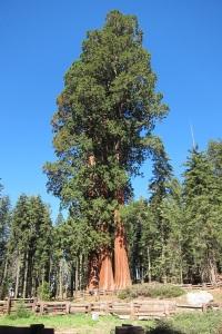 Tree_email_Inovasi_com